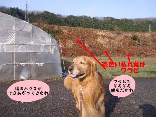 004_20130404200446.jpg