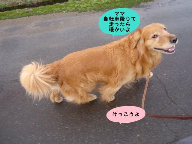 005_20130410181049.jpg