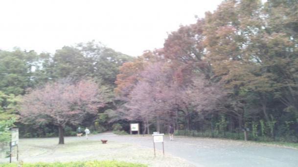小山内裏公園_convert_20121111215620