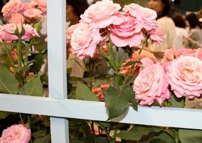 20125g18seibubara6.jpg