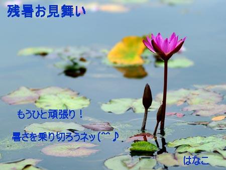 zansyo11.jpg
