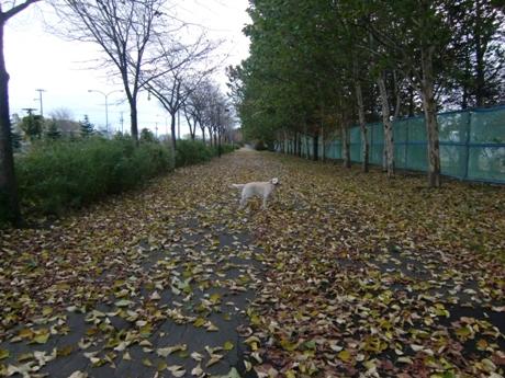 落葉のじゅうたん