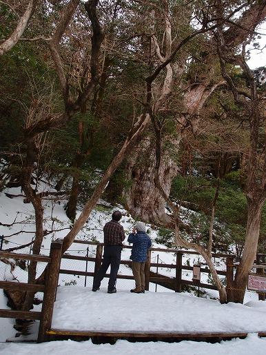 縄文杉デッキ (1)