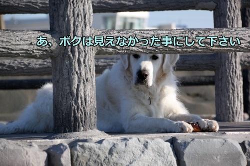 s-IMG_0194_201401251340536ac.jpg