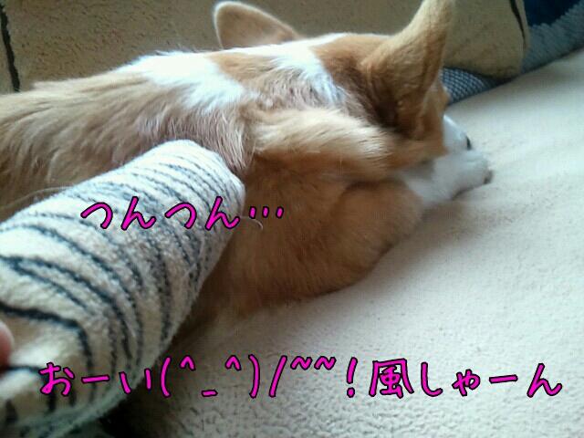 おーい(^_^)/~~!
