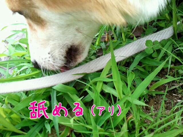 舐める(アリ)
