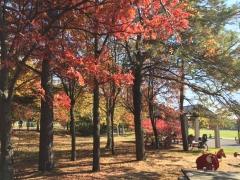 給水公園紅葉