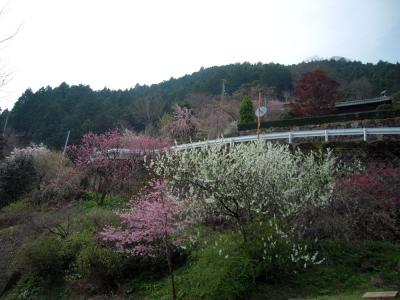 kamikatu20120409-22_4