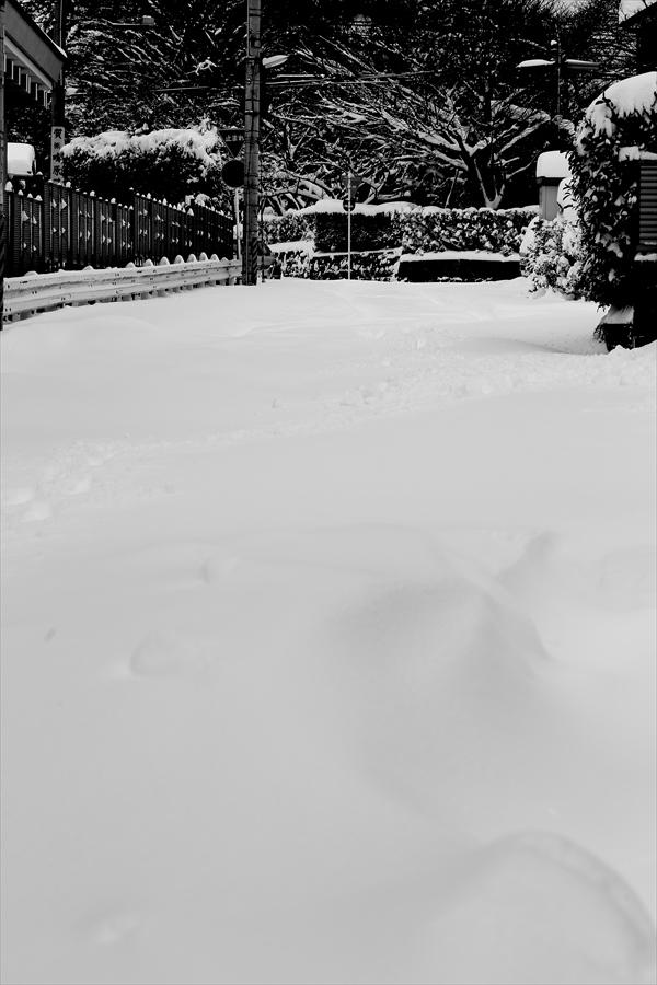仙台大雪03