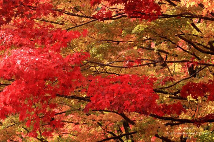 姫宮神社1