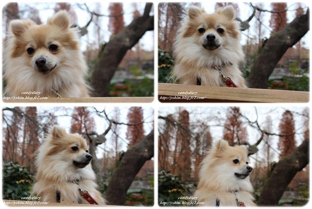 cats1_20121223214153.jpg