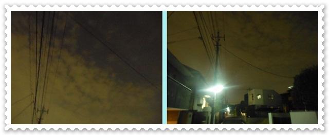 cats_20120810232547.jpg