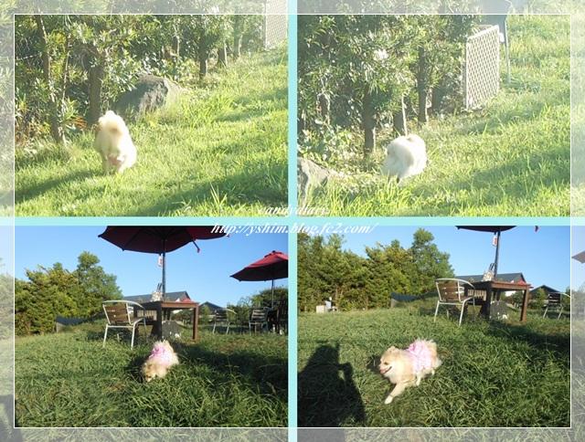 cats_20120911230845.jpg
