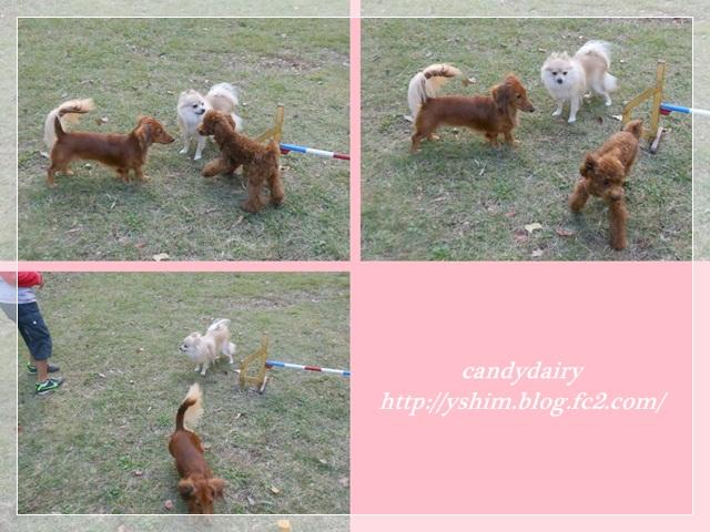 cats_20121020221632.jpg