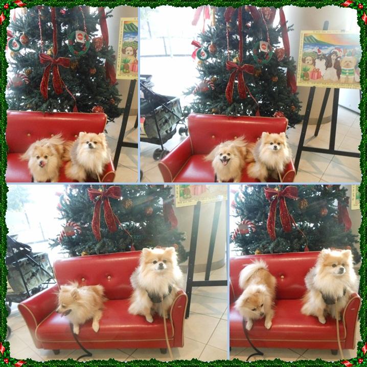 cats_20121120230134.jpg