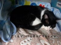 03_20121115143550.jpg