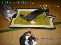 15_20130115173216.jpg
