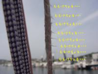 RIMG0074_20120515103633.jpg