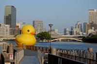 duck-b10.jpg
