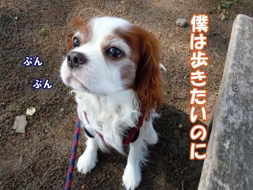 2012051904.jpg
