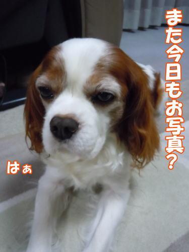 2012060101.jpg