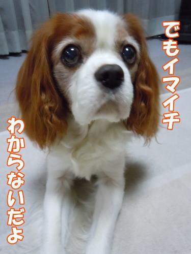2012060106.jpg