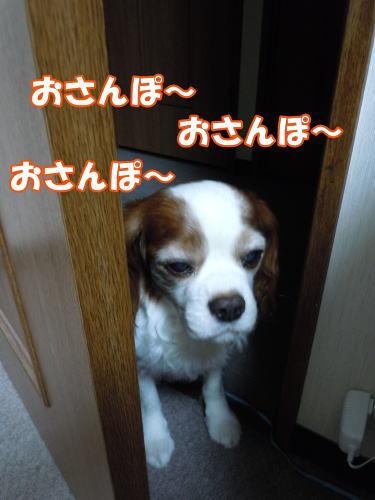 2012060802.jpg