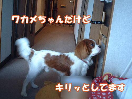 2012061210.jpg