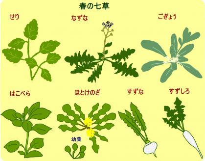 130107_春の七草