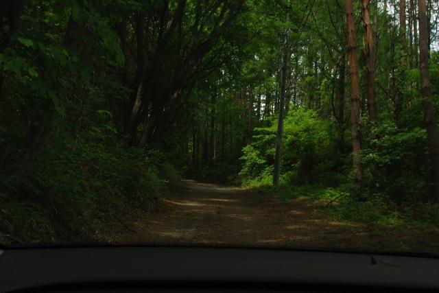 あさまの森②1