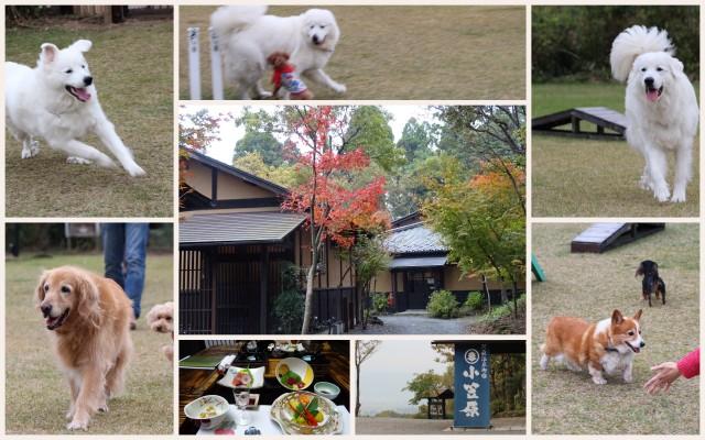 141108くじゅう花公園5