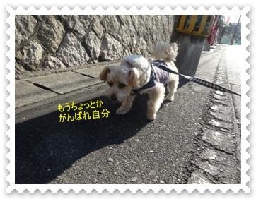DSC03603_20140107001836a09.jpg