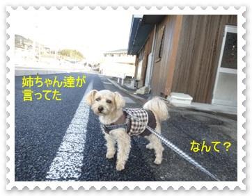 DSC03660_20140109233821045.jpg