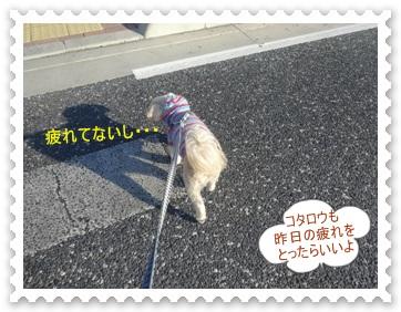 DSC03983_20140119234348fd3.jpg
