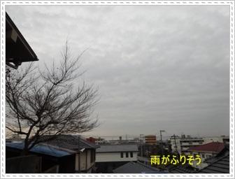 DSC03993_201401202323090e1.jpg