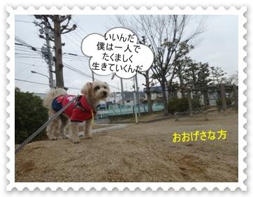 DSC04280_2014012900365435f.jpg