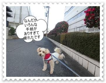 DSC04367.jpg