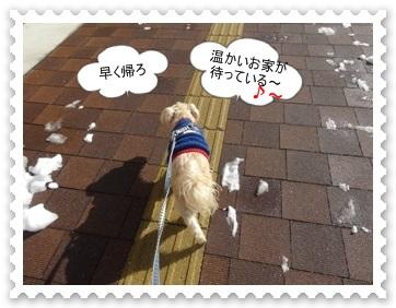 DSC04694_201402100614342cb.jpg