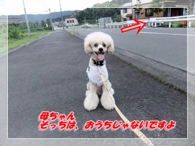 4_20120819073635.jpg