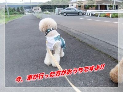 5_20120819073635.jpg