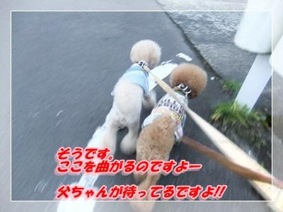 6_20120819073634.jpg