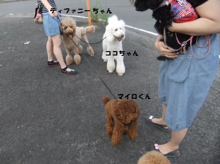 DSCF1922_convert_20120709200356.jpg