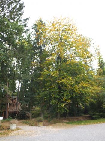 木の家の森