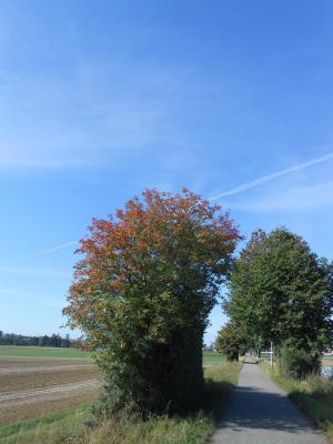 秋になる通勤路