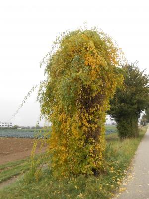 秋のボウボウ6