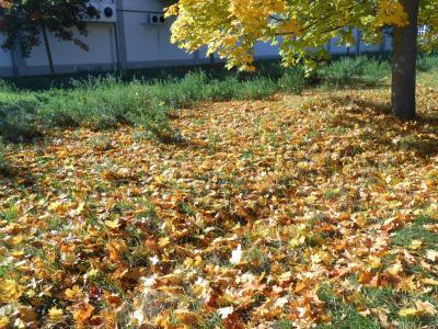 秋のボウボウ2