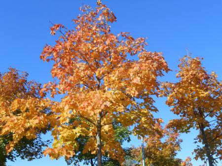 秋のボウボウ8