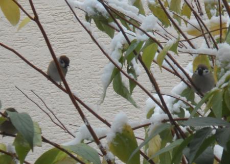 雪でも来たトリさん