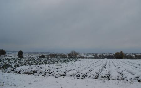 雪の積もった畑