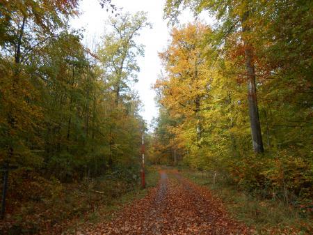 秋のシューンブーフ3